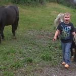 PferdeFuehren